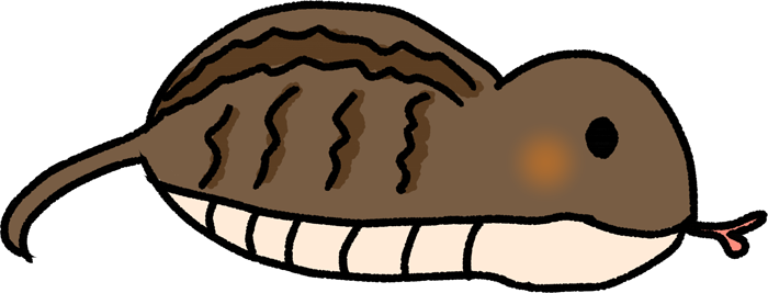 濃い鱗のツチノコのイラスト