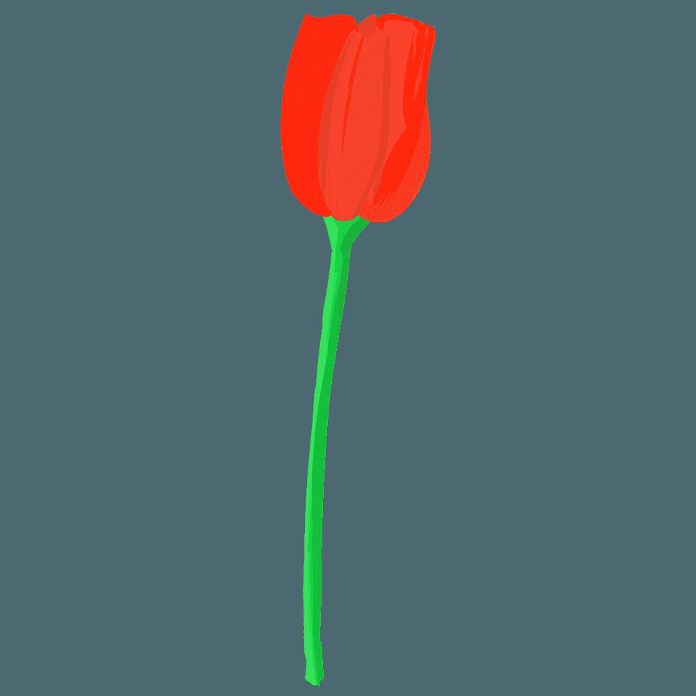 赤いチューリップイラスト