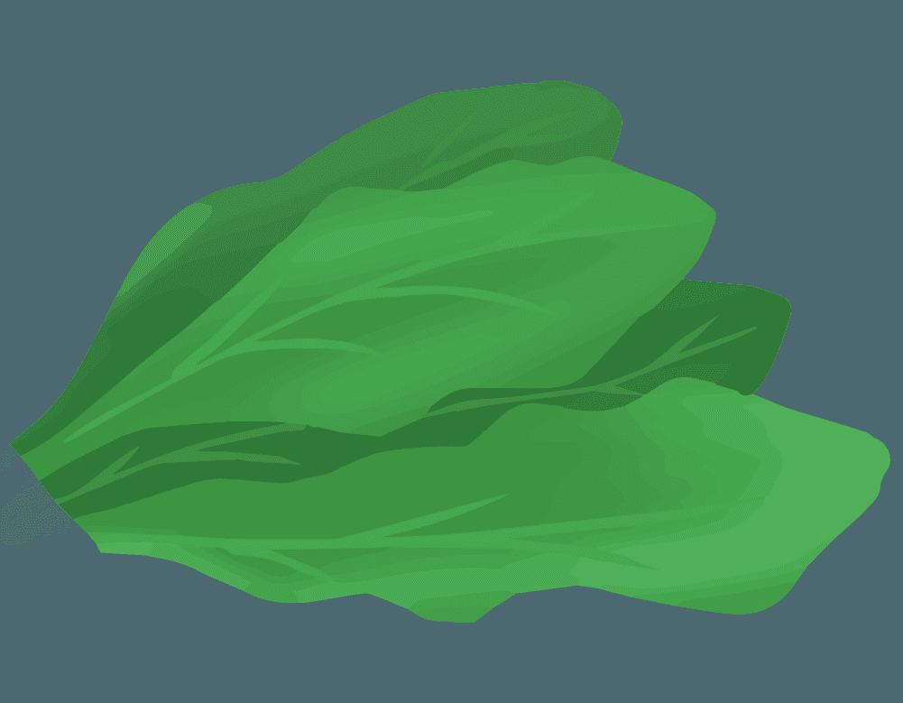 ホウレンソウの葉のイラスト