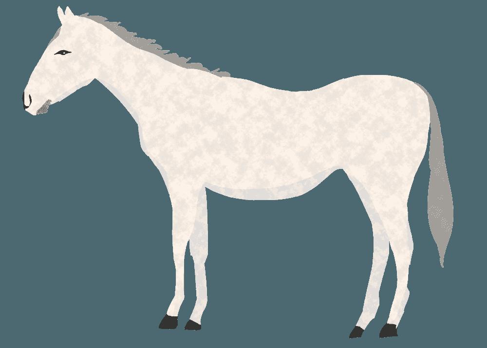スマートな白馬イラスト