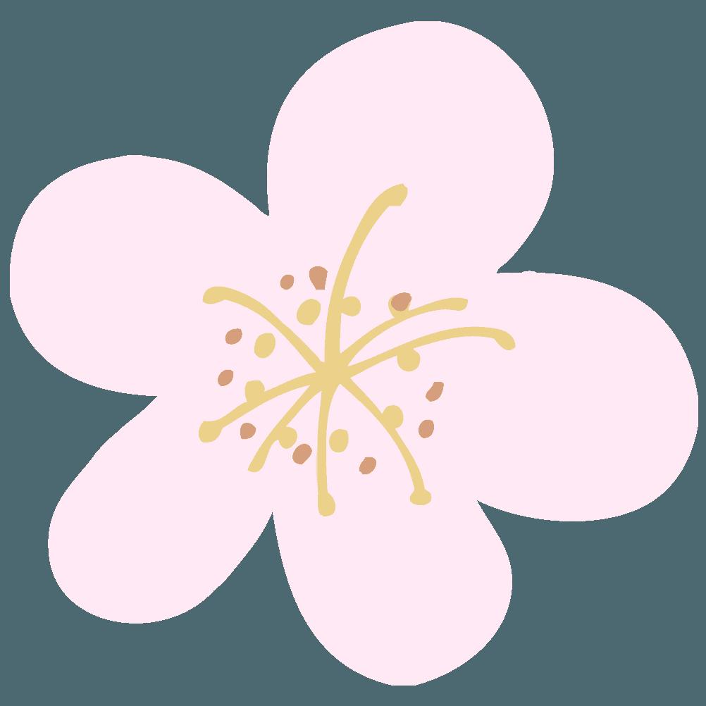 白っぽい梅の花イラスト