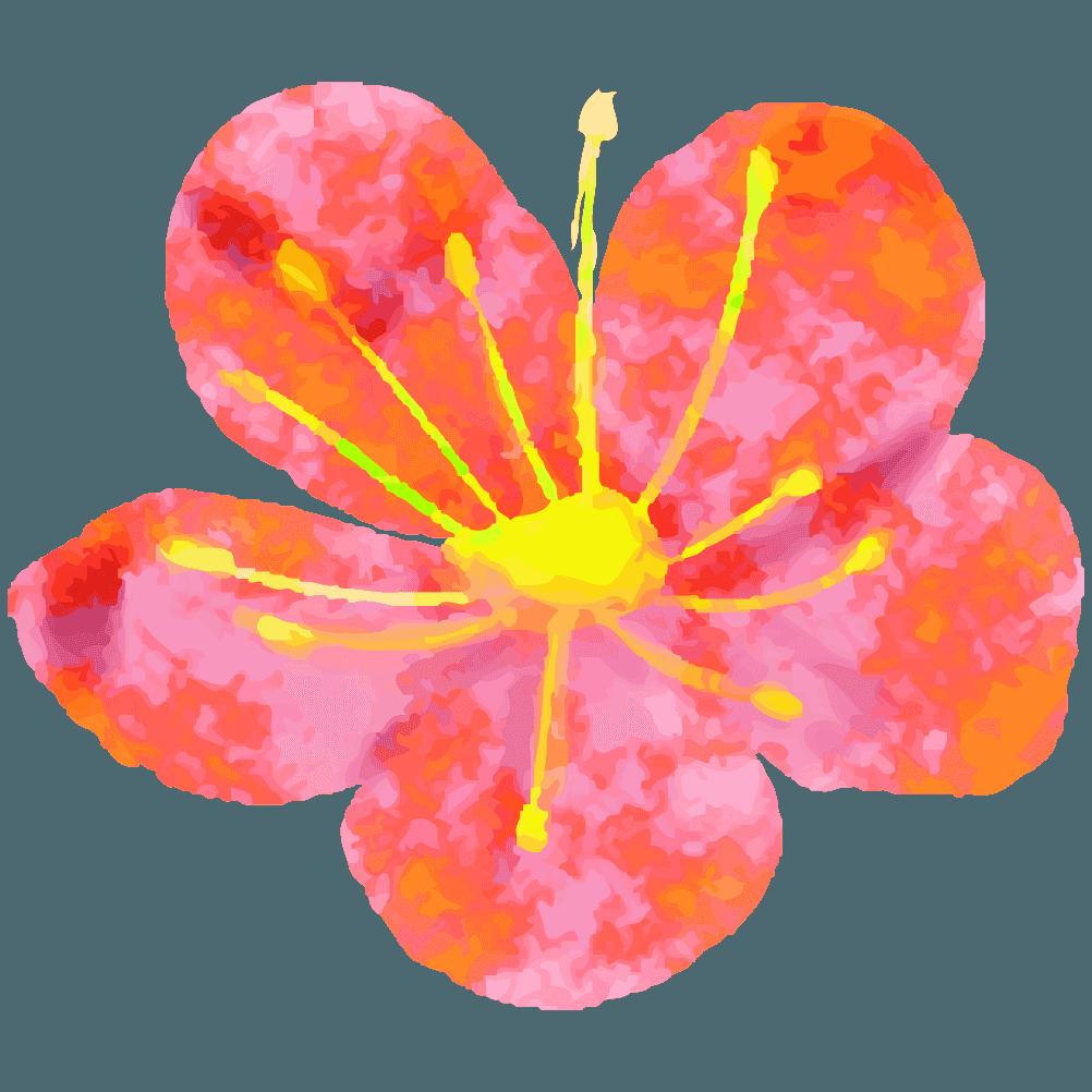 手書き感のある梅の花イラスト