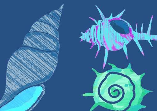 不思議な貝殻のイラスト