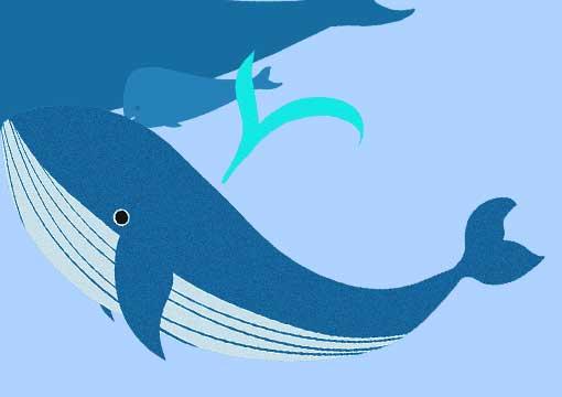 可愛いクジラのイラスト
