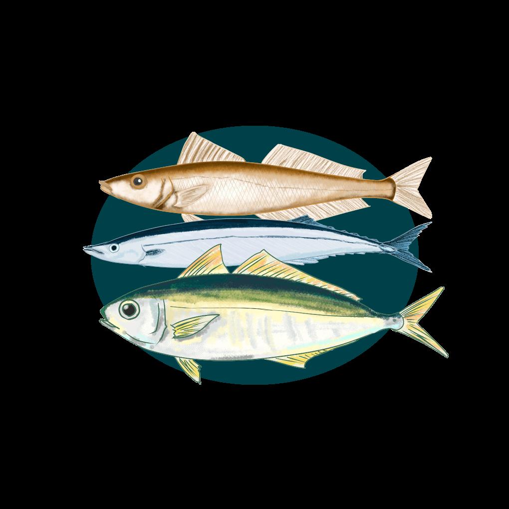 青魚のイラスト