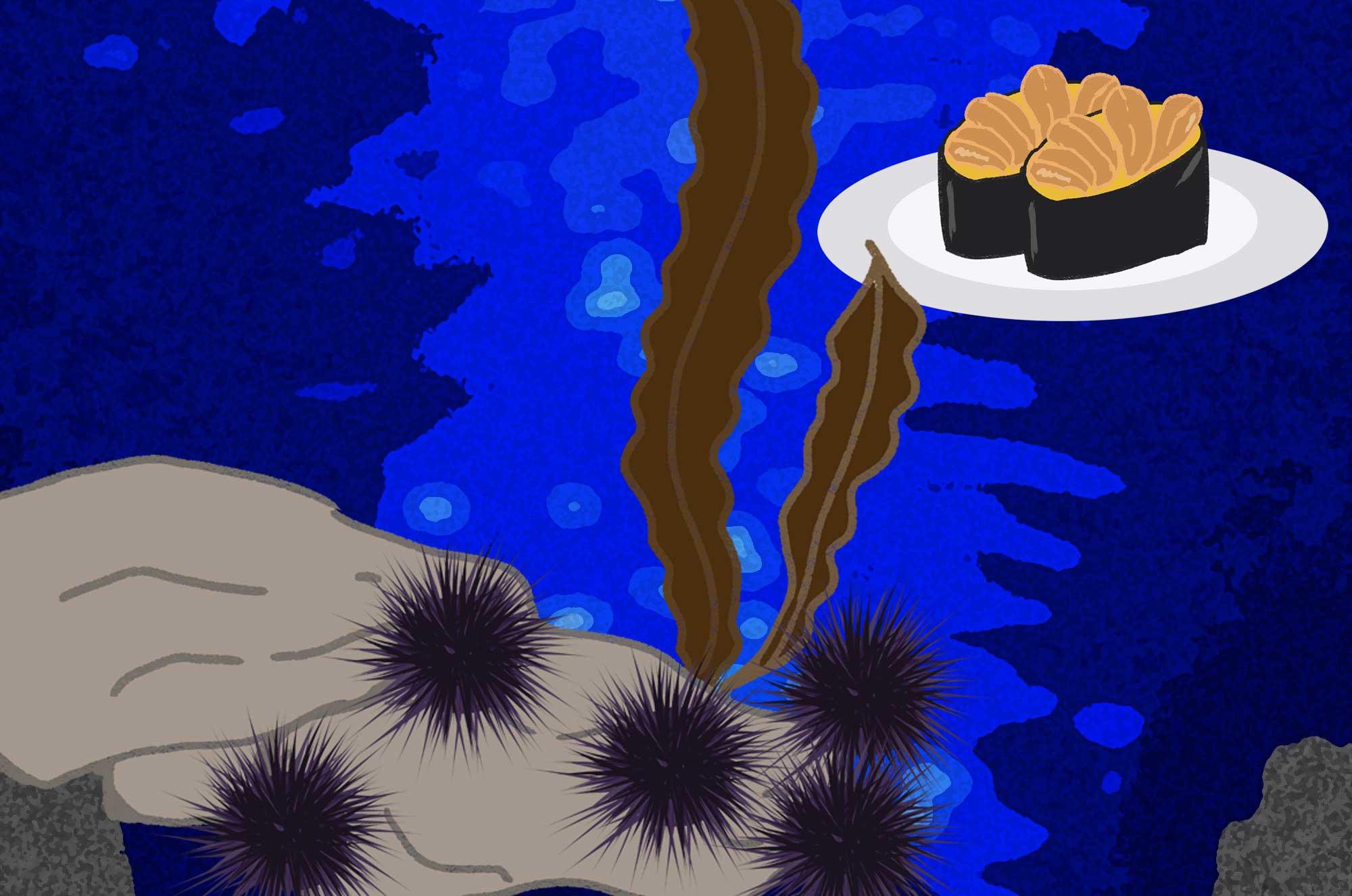 うにイラスト - お寿司に可愛い海のトゲトゲ生物無料素材