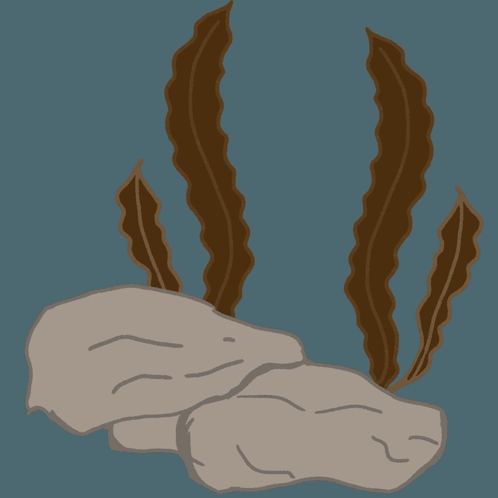 海底の岩と昆布のイラスト