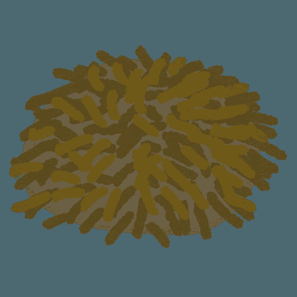 クレヨンで描いたバフンウニイラスト