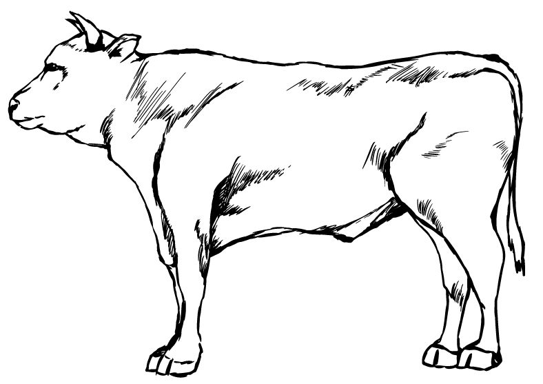 和牛の線画のイラスト