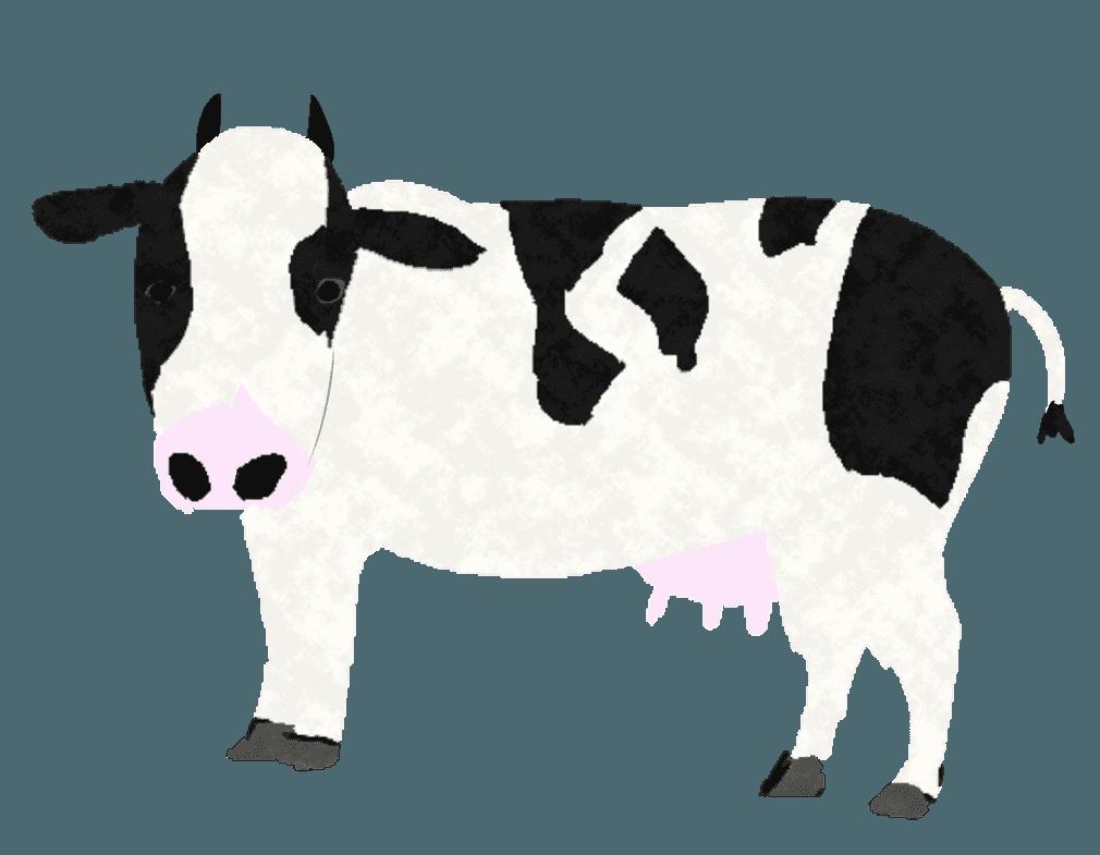 こっちを見るホルスタイン牛イラスト