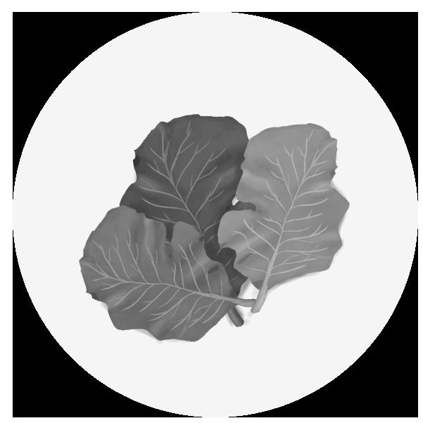 ケールのイラスト(白黒)