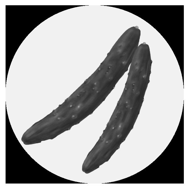 きゅうりイラスト(白黒)
