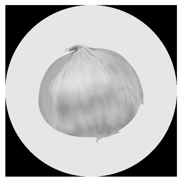 たまねぎイラスト(白黒)
