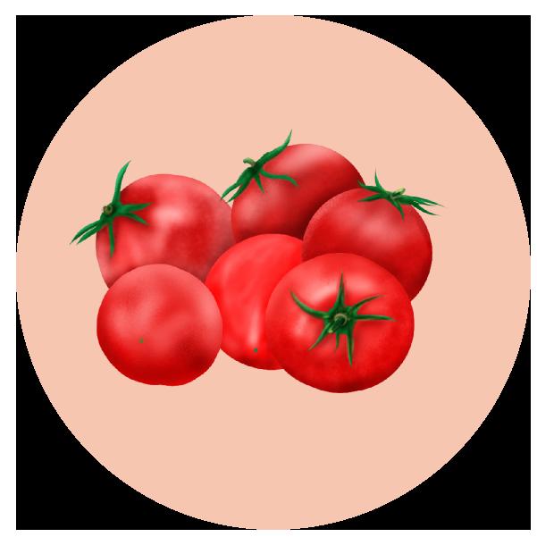 トマトイラスト