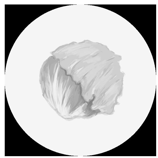 レタスのイラスト(白黒)