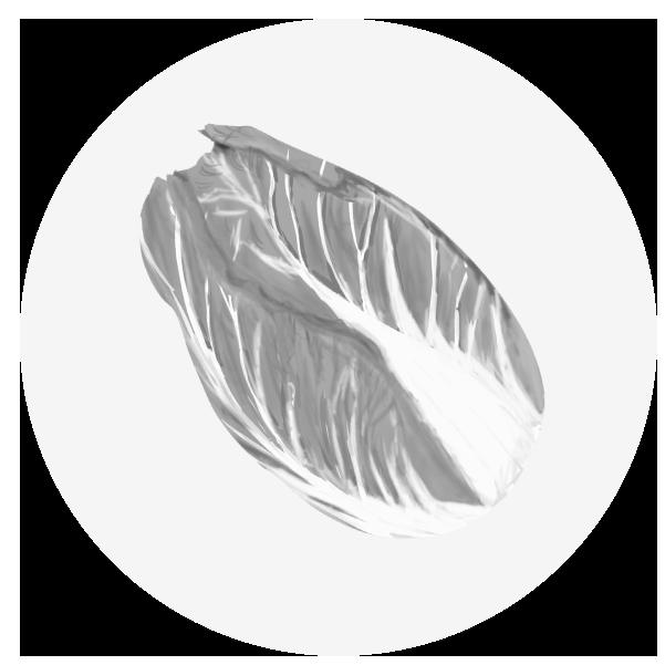 白菜のイラスト(白黒)