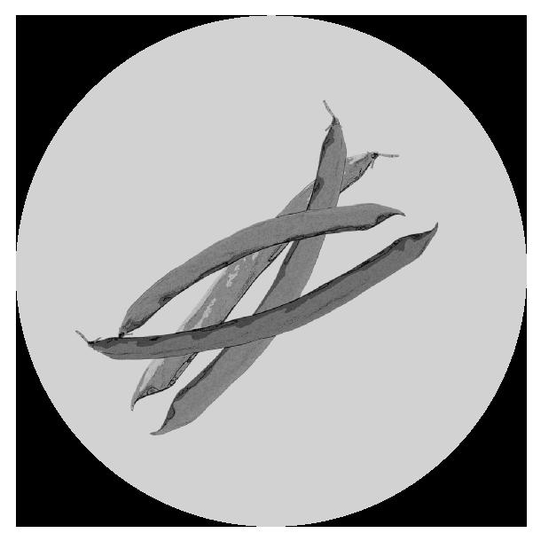 いんげんのイラスト(白黒)