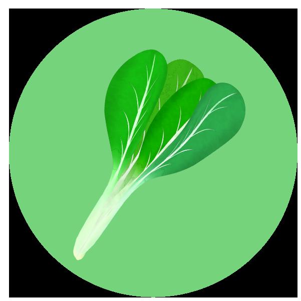 小松菜のイラスト