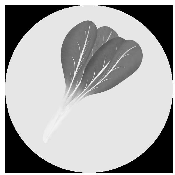 小松菜のイラスト(白黒)