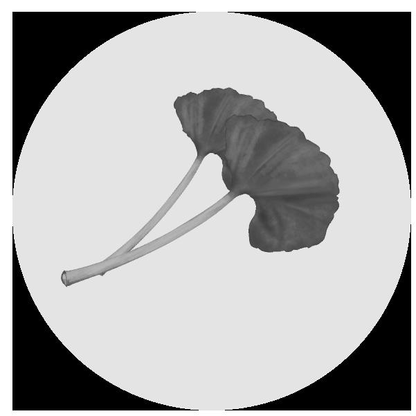 ふきのイラスト(白黒)