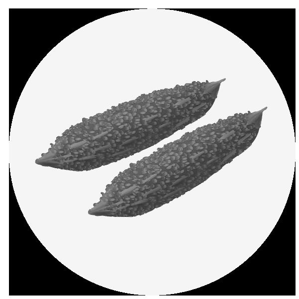 ゴーヤのイラスト(白黒)
