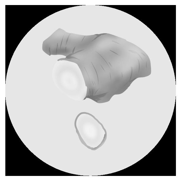 生姜のイラスト(白黒)