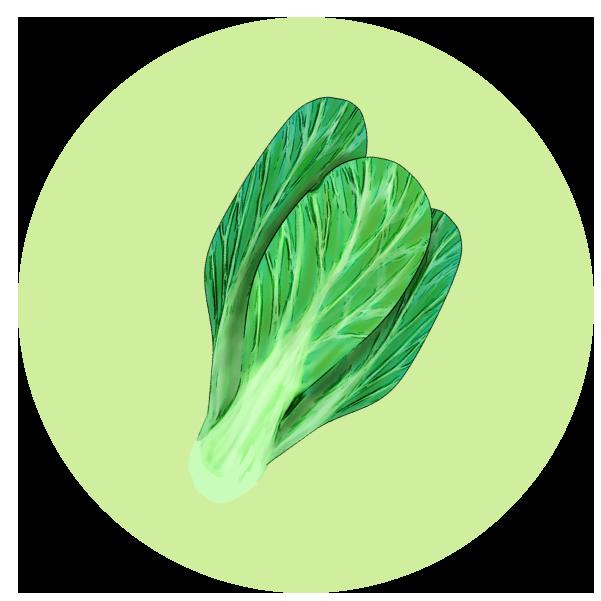 チンゲン菜のイラスト