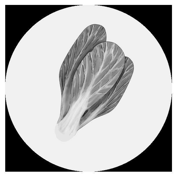 チンゲン菜のイラスト(白黒)