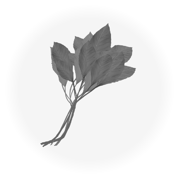 モロヘイヤのイラスト(白黒)