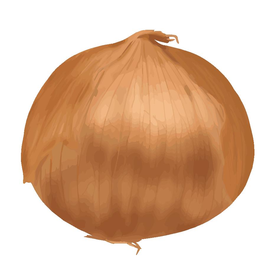 玉ねぎイラスト