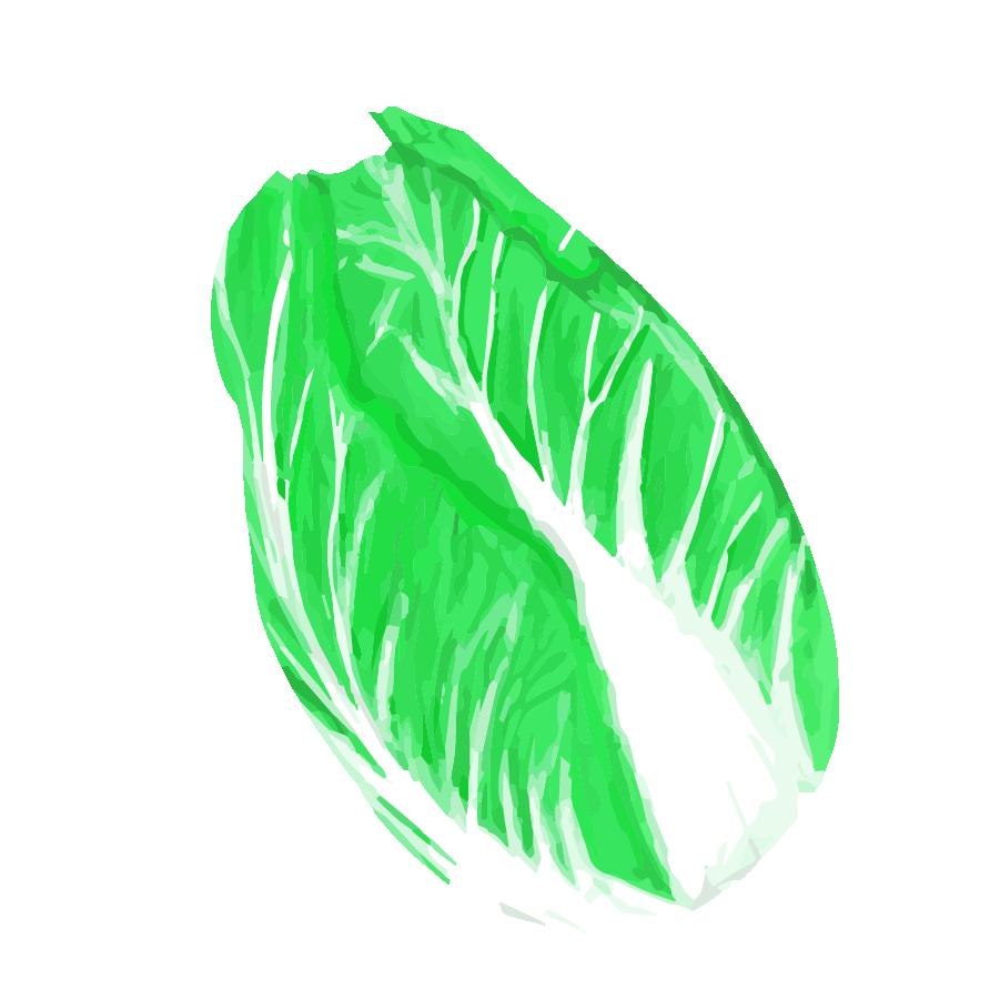 白菜イラスト