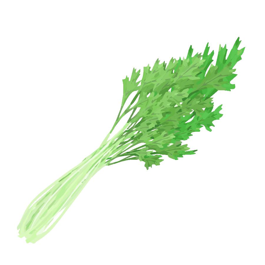 水菜イラスト