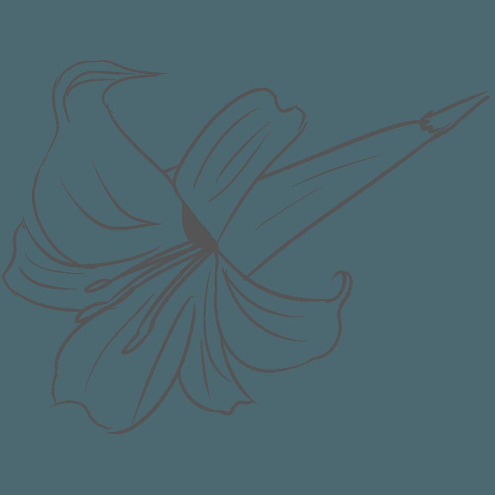 斜めからみた線画のゆりの花イラスト