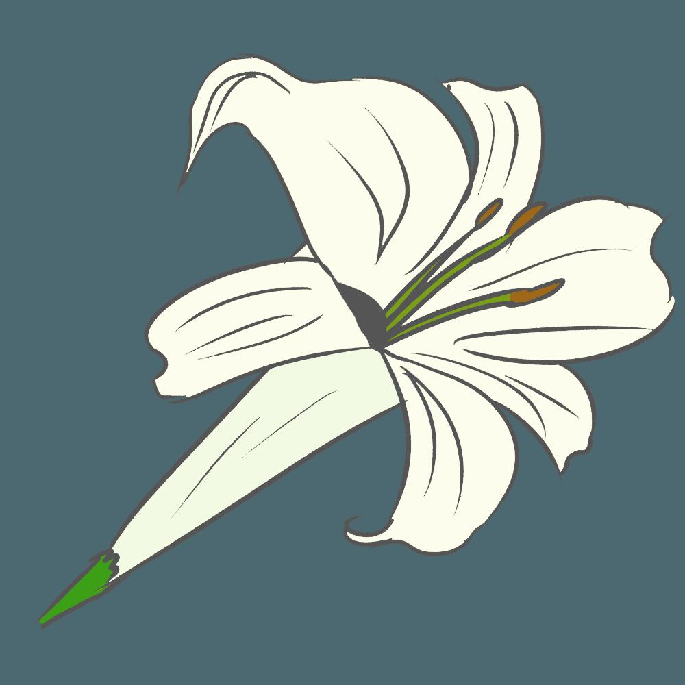 シンプルなgペン画のゆりイラスト