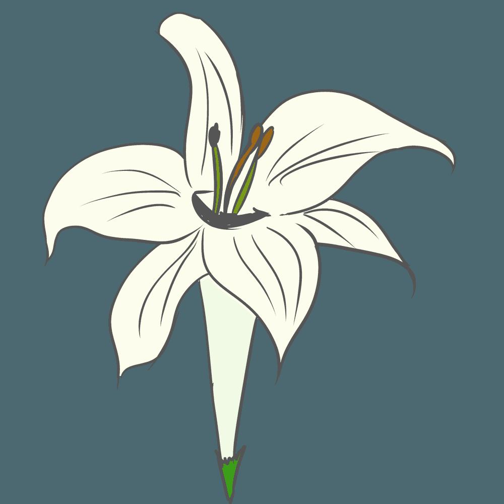 斜め上からみたゆりの花のイラスト