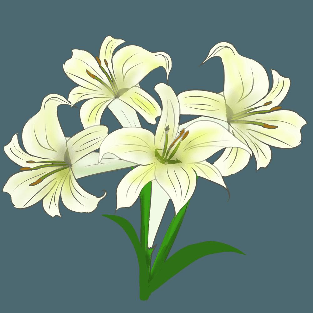 咲き乱れるゆりの花々のイラスト