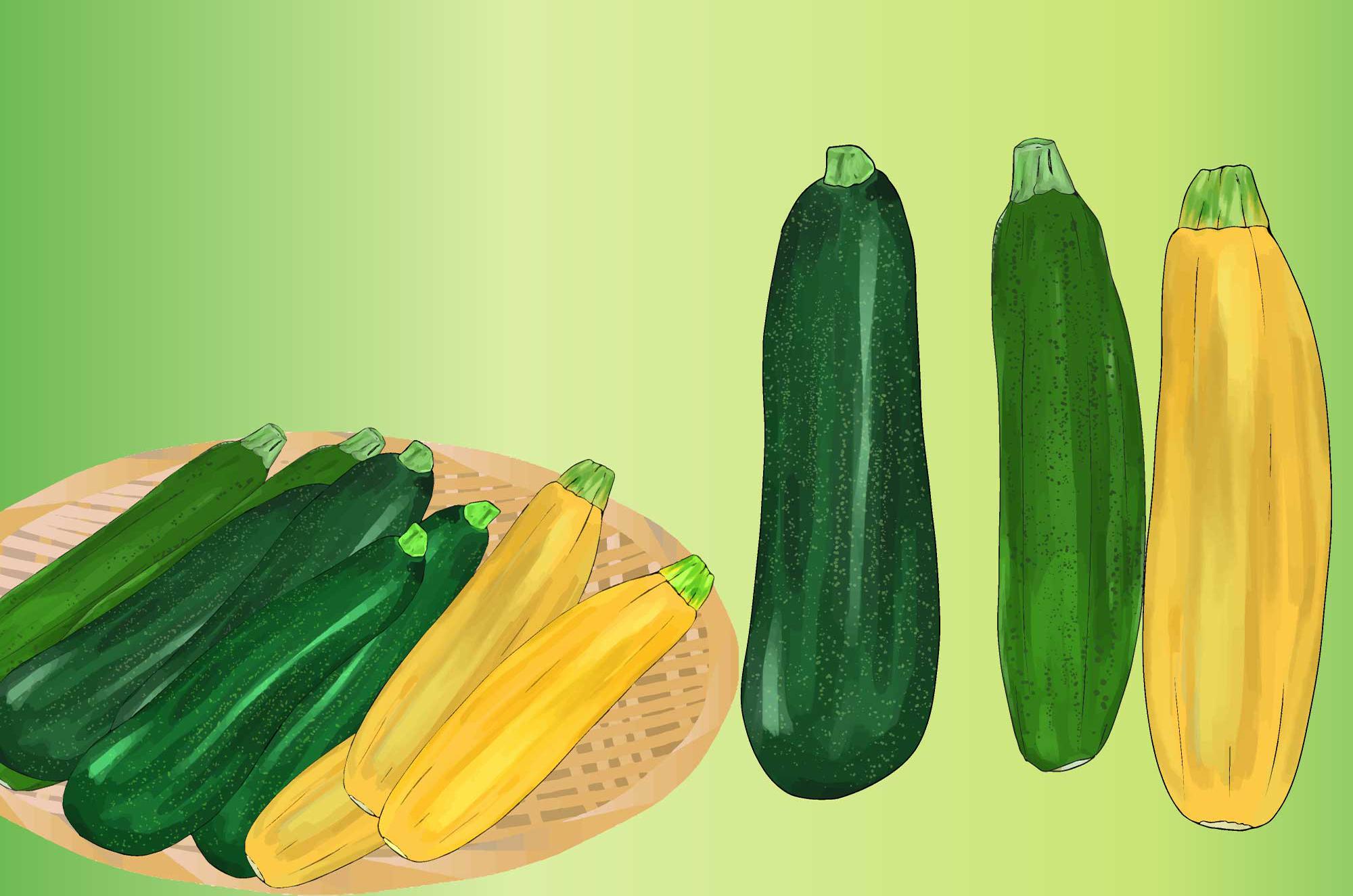 ズッキーニのイラスト - 新鮮なウリ科の野菜無料素材